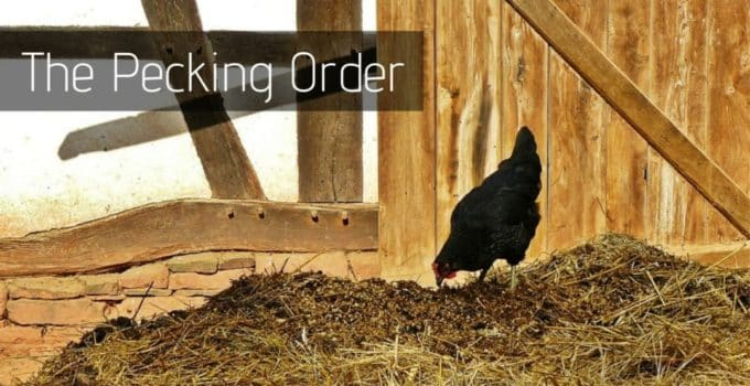 The Pecking Order